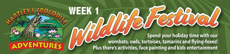 Week 2 - Wildlife Festival
